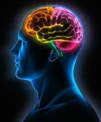 Cerebro y objetivos profesionales